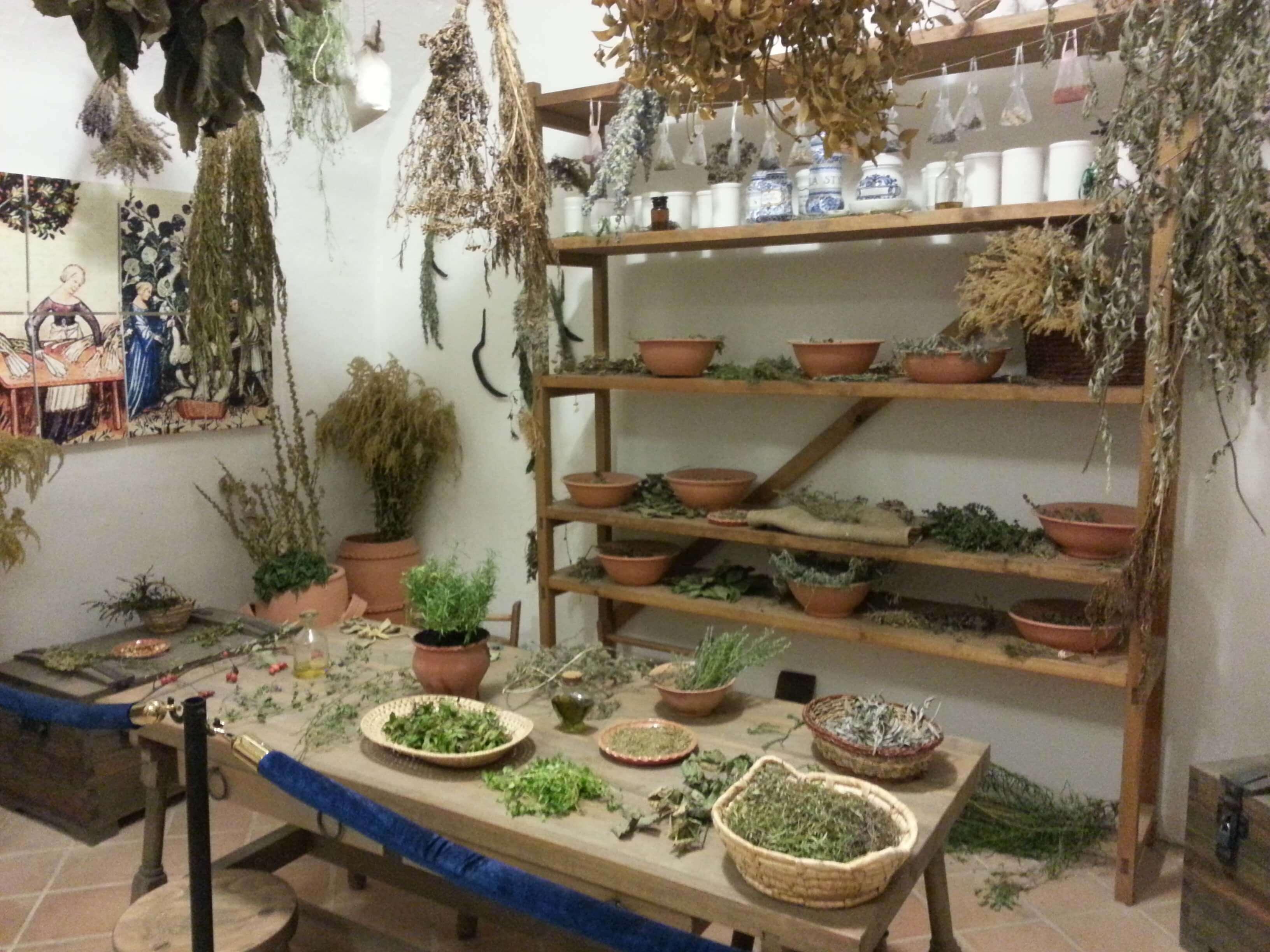 Gyógynövény terem
